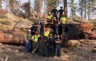 tree-care-workers