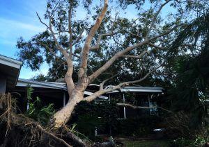 tree-fell-on-roof